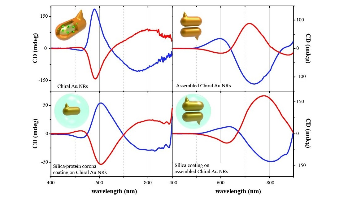 Tuning the morphology and chiroptical properties of discrete gold nanorods with amino acids