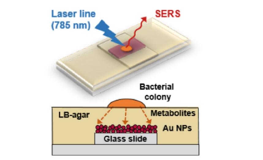 Surface-enhanced Raman scattering (SERS) imaging of bioactive metabolites in mixed bacterial populations