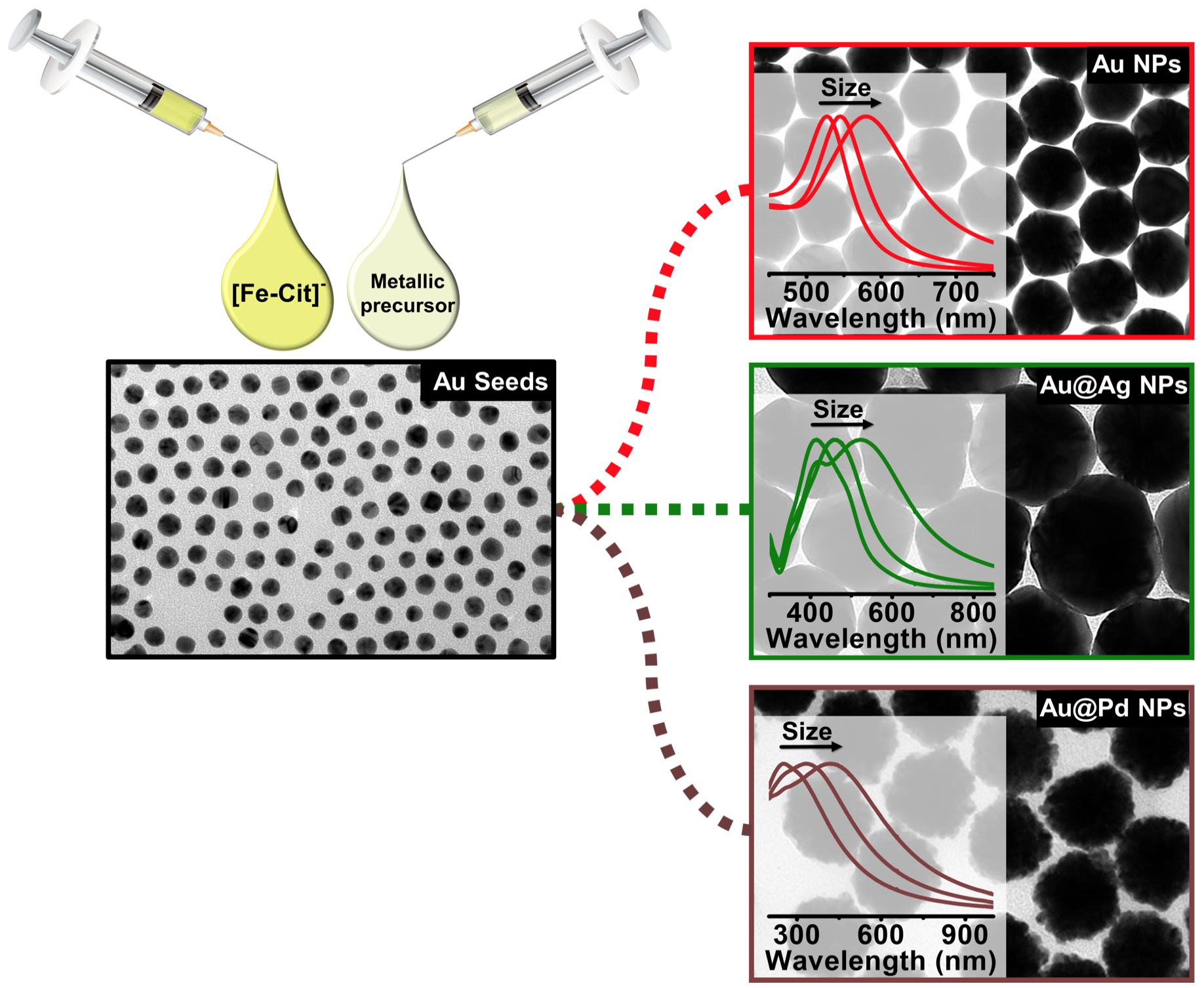 The versatility of Fe(II) in the synthesis of uniform citrate-stabilized plasmonic nanoparticles with tunable size at room temperature
