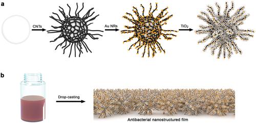 Sunlight-Sensitive Plasmonic Nanostructured Composites as Photocatalytic Coating with Antibacterial Properties